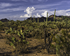 images/arizona/_6454604_small.jpg