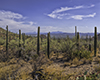 images/arizona/_6454749_small.jpg