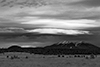 images/arizona/_k5_0124_bw_small.jpg
