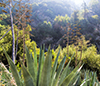 images/california/_d808935_small.jpg