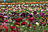 images/california/_k205800_small.jpg